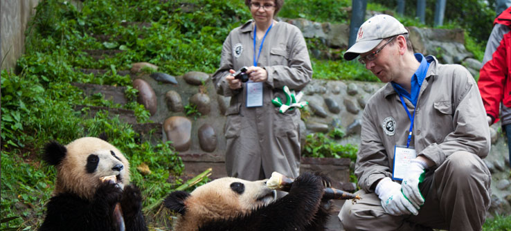 Earthwatch volunteers feed bamboo to young pandas.